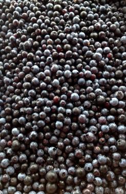 New Brunswick wild blueberries make incredible pies - photo - Karen Anderson