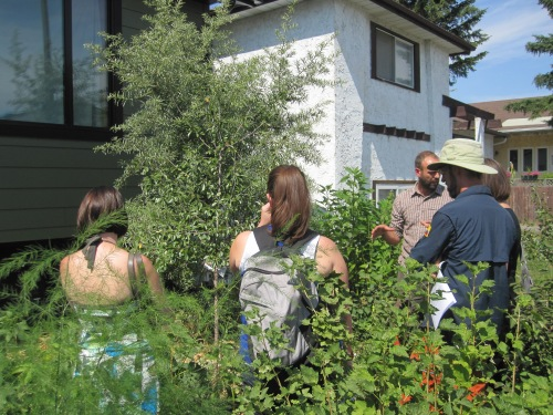 "Rob Avis explains how his front yard is becoming a ""food forest"""