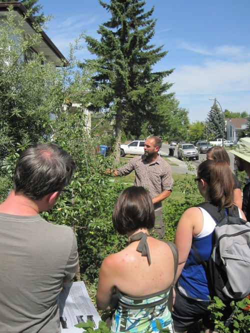 "Rob Avis explains how his front lawn became a ""Food Forest"""