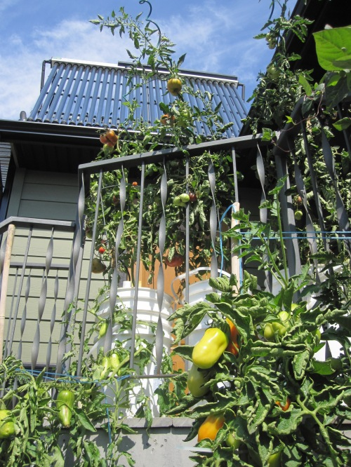 There is no wasted space & The Avis's utilize solar energy and vertical growing in their garden