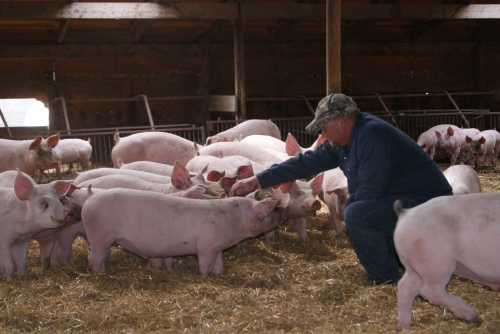 My friend Greg Spragg of Spragg's Meats - I call him the Pig Whisperer - he is kind & will only raise pastured, hormone and antibiotic free pigs