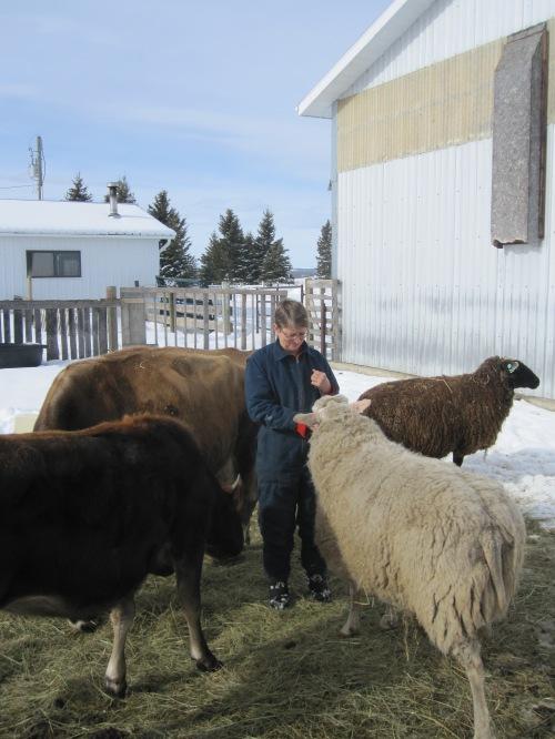 Sweetmeadow Cheese maker Sandy Easterbrooks w her Jersey cows & East Friesen sheep - photo credit Karen Anderson