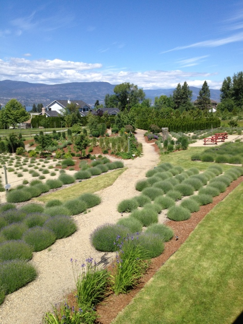 The Lavender & Herb Farm, Kelowna, BC