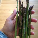 Alberta Asparagus I have 25 asparagus plants in my backyard Edgar's Asparagus has 26 acres - I rely on them for the bulk of my eating Asparagus on Hand - self portrait - Karen Anderson