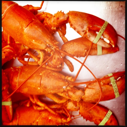 Lobsters fresh from the pot - lovingly prepared by my Dad photo - Karen Anderson
