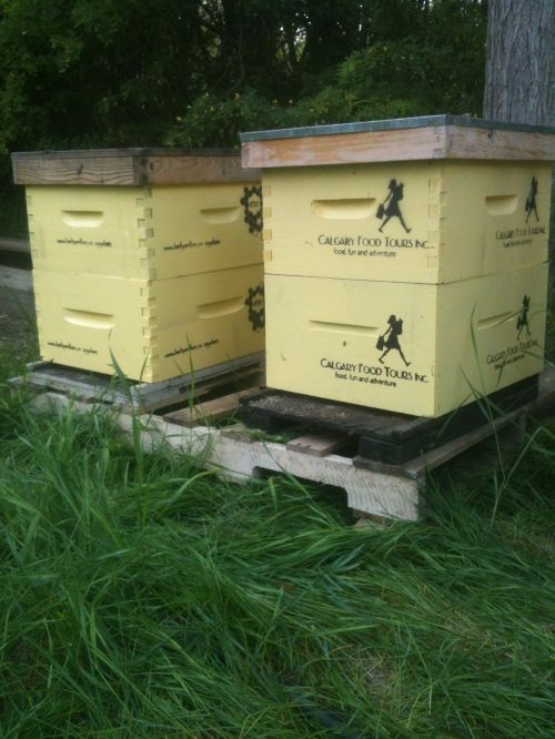 My Shouldice Community Garden bee hive will be used for education of backyard beekeeping apprentices all this summer