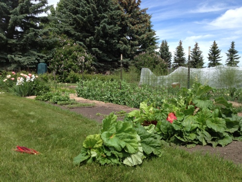 Tending my friend Penny's beautiful garden @ Highwood Crossing Photo  - Karen Anderson