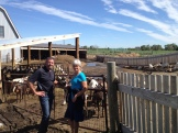 Ben and Anita Oudshoorn Fairwinds Farm - Fort MacLeod, AB photo - Karen Anderson