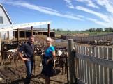 Ben and Anita Oudshoorn Fairwinds Farm - Fort MacLeod, AB photo - Karen Anderson