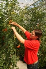 Carmen Fuentes is a successful young Alberta Farmer - photo - Karen Anderson