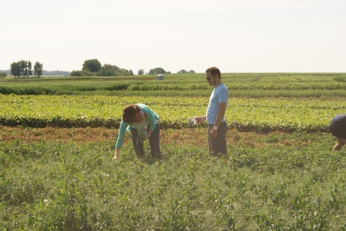 A pair of pea pickers enjoying Edgar Farms photo - Karen Anderson