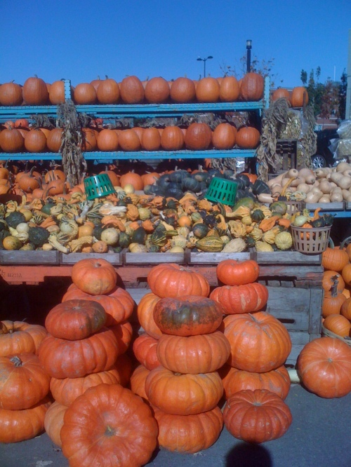 It's pumpkin time in Alberta photo - Karen Anderson