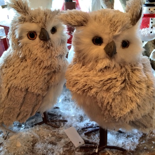 owls are everywhere photo - Karen Anderson