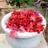 fashion imitates nature's colours in Rajasthan photo - Karen Anderson