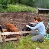 Keeping pigs photo - Karen Anderson