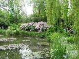 Soft light on Monet's lily pond photo - Karen Anderson