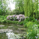 Soft light on Monet's lily pond photo - Karen Anderson
