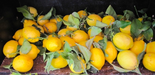 Market fresh lemons photo - Karen Anderson