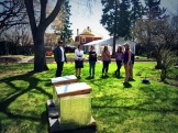 We visit Calgary Food Tours Inc.'s 2 beehives in the garden at Rouge photo - Karen Anderson