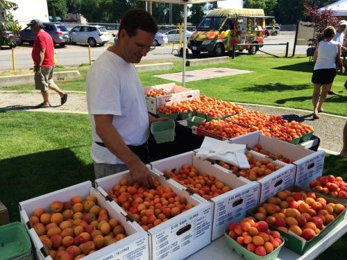 apricot abundance photo - Karen Anderson