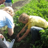 John teaching people how to dig potatoes - photo - Karen Anderson