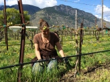 South Okanagan vineyard spring cleaning - photo - Karen Anderson