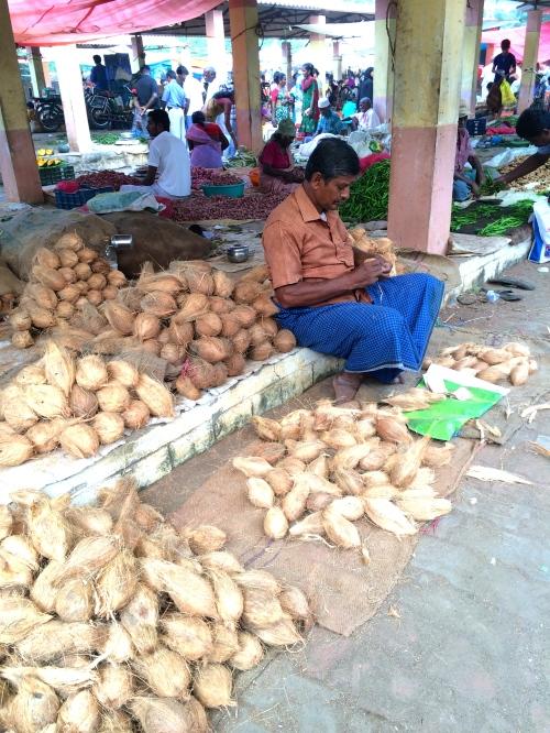 coconuts at the market near Madurai, Tamilnadu, South India - photo - Karen Anderson
