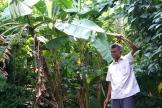 Mr. Abraham has 6 kinds of bananas in his garden - photo - Karen Anderson