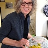Penny Marshall with freshly cleaned dandelion heads - if you can't beat them enjoy them - photo - Karen Anderson