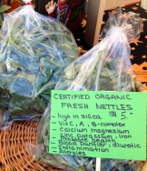 you can find stinging nettles at some farmers' markets - photo - Karen Anderson