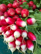 radishes - photo - Karen Anderson
