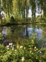 still life pond - photo - Karen Anderson