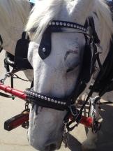 sleepy horse - photo - Karen Anderson
