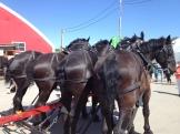 horse's asses - photo - Karen Anderson
