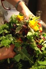 early summer lettuce - photo - Karen Anderson