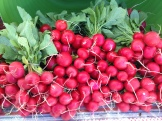 red radishes - photo - Karen Anderson
