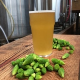 Spruce Tip Beer - photo - Karen Anderson