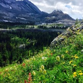 Wildflowers in bloom at Burstall Pass - photo - Karen Anderson