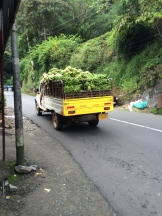 banana truck in South India - photo credit - Karen Anderson - @savouritall