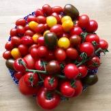 Tomatoes - karen Anderson