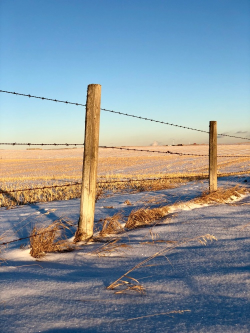 alberta in winter, wide open plain