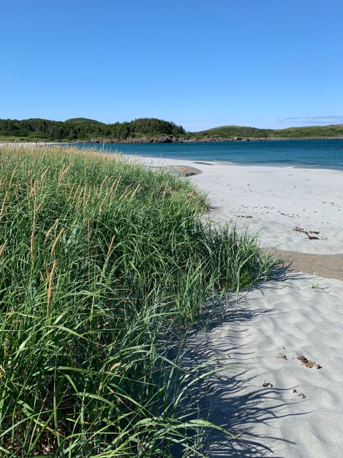 white sand beach in NL - photo by Karen Anderson