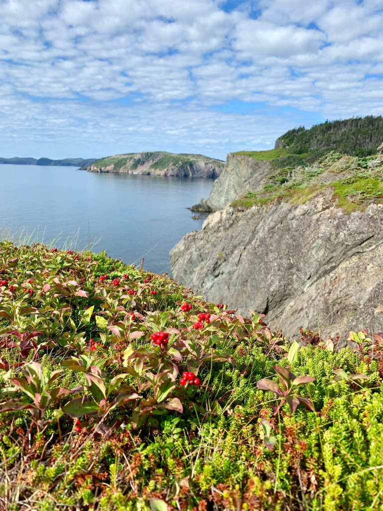 Skerwink Trail, NL - photo by Karen Anderson